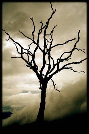 درخت خشکیده تفکر