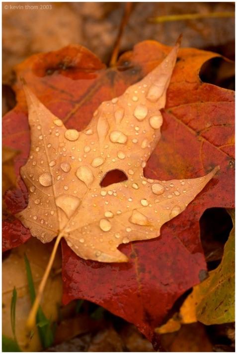 رنگارنگی پاییز یعنی رنگارنگی تو